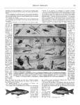 Meccano Magazine Français August (Août) 1933 Page 171